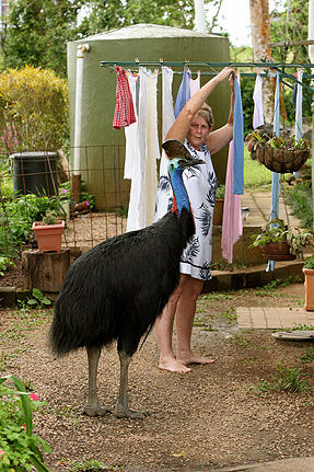 Cassowary attacks in Australia  attacks by cassowaries